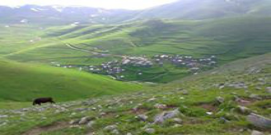 Aydıntepe Günbuldu Köyü Resimleri