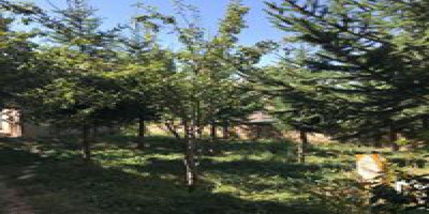 Bayburt Kitre Köyü Resimleri