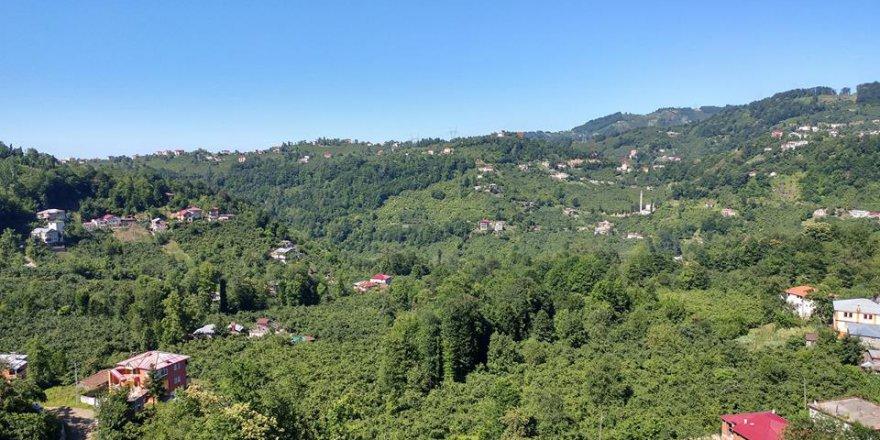 Vakfıkebir İlyaslı Köyü Resimleri