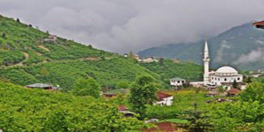 Yomra Pınarlı Köyü Resimleri