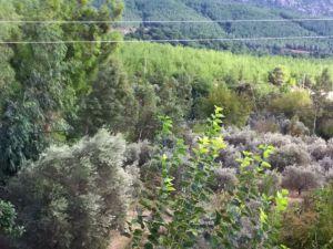 Adana Kozan Ferhatlı Köyü Resimleri