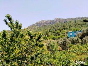 Adana Kozan Gedikli Köyü Resimleri