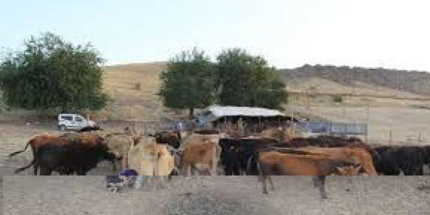 Çınar Sevindik Köyü Resimleri