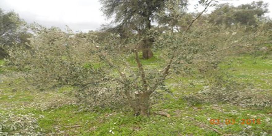 Dalaman Kayadibi Köyü Resimleri