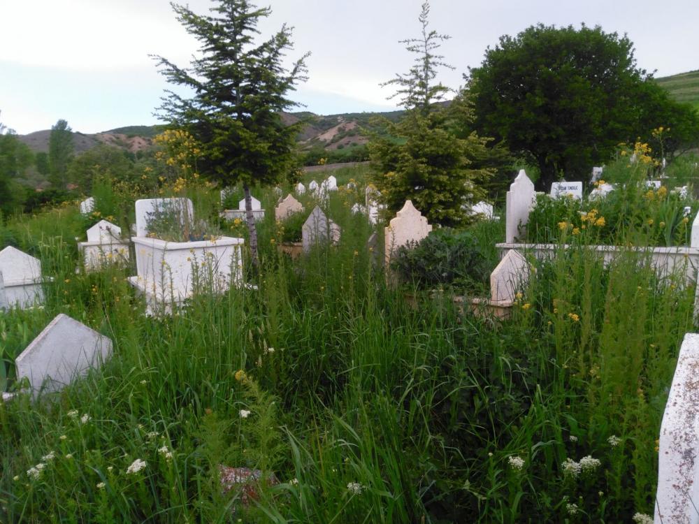 Muratkolu Köyü Resimleri 2018 1