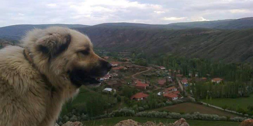 Gemerek Durgunsu Köyü Resimleri