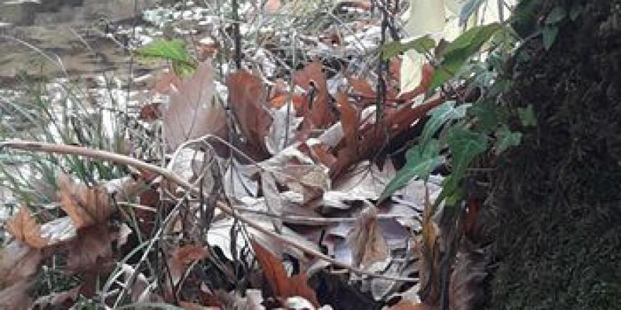 Kavaklıdere Salkım Köyü Resimleri