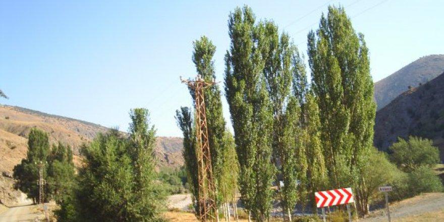 Gölova Arslanca Köyü Resimleri