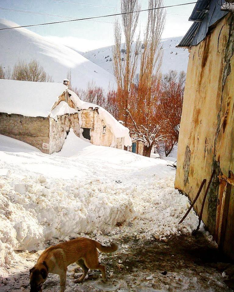 Gürün Güllübucak Köyü Resimleri 1