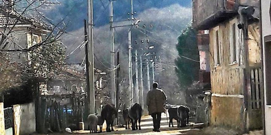 Çınarcık Şenköy Resimleri