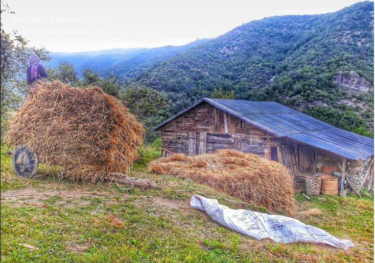 Alaçam Kalıkdemirci Köyü Resimleri 1