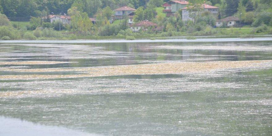 Ladik Hamitköy Köyü Resimleri