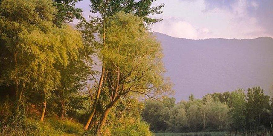 Arifiye Mollaköy Köyü