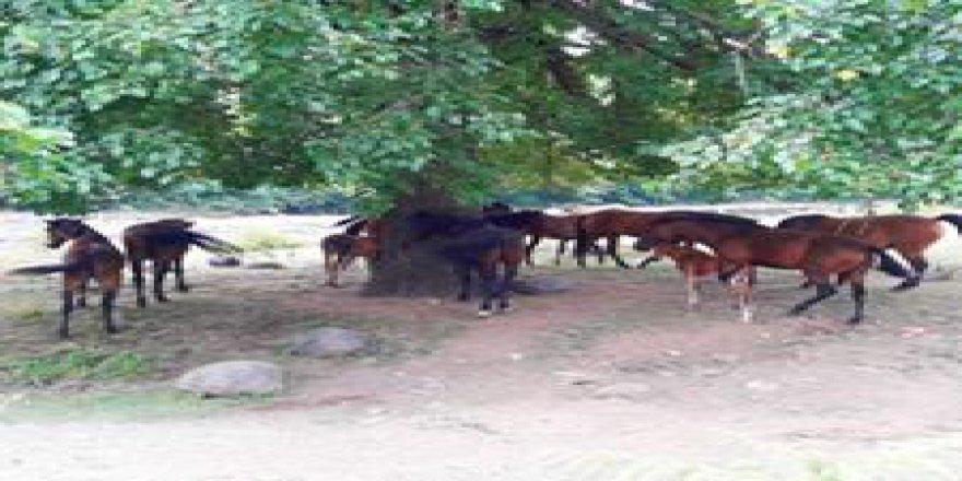 Salıpazarı Kalfalı Köyü Resimleri