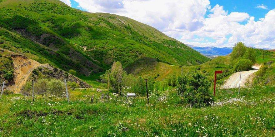 Aşkale Musadanışman Köyü Resimleri