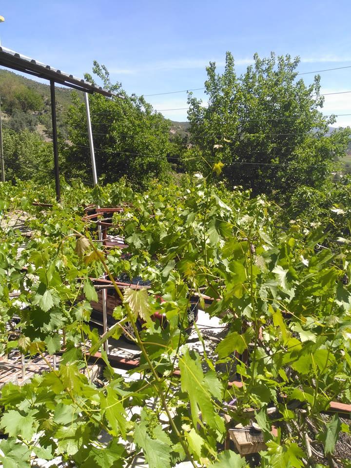 Bahçe Arıklıkaş Köyü Resimleri 1