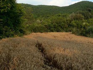 Adana Karaisalı Ömerli Köyü Resimleri