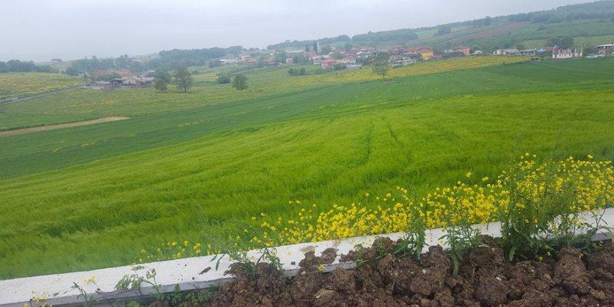 Kaynarca Topçu Köyü Resimleri