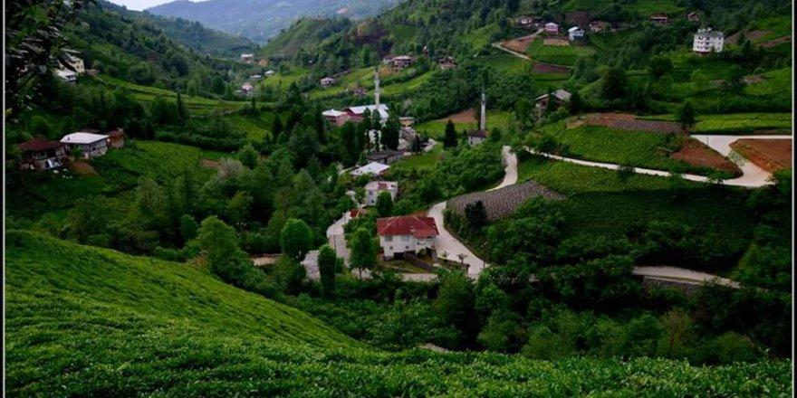 Fındıklı Beydere Köyü Resimleri