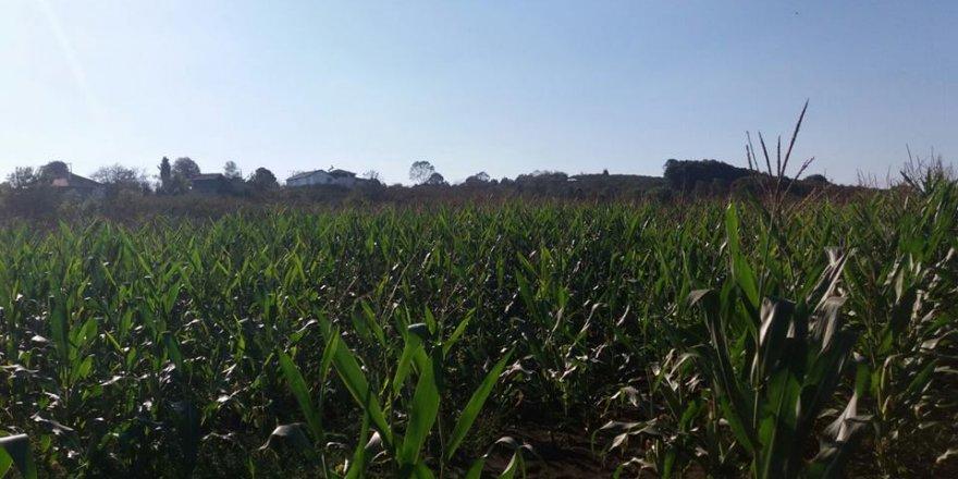Ferizli Çiftlik Köyü Resimleri