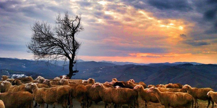 Karasu Paralel Köyü Resimleri