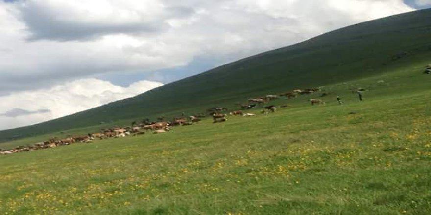 Ardahan Tazeköy Köyü Resimleri