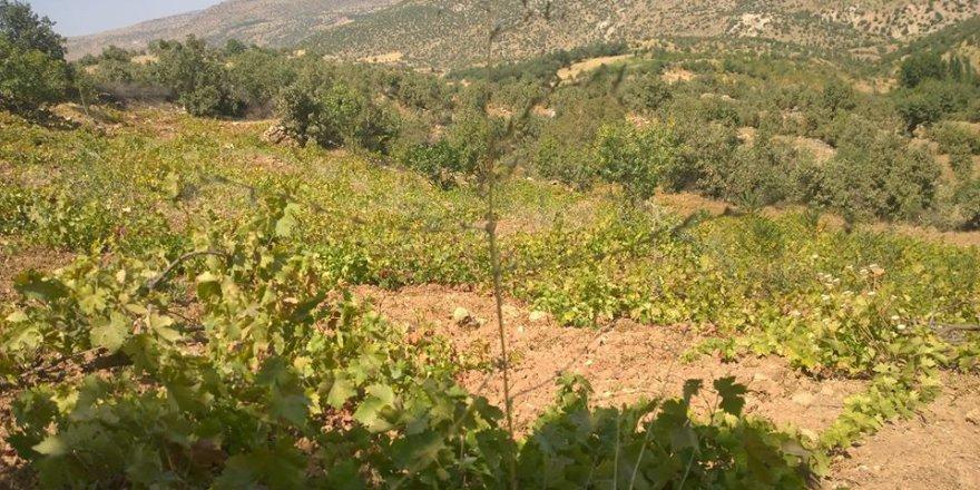 Dargeçit Suçatı Köyü Resimleri