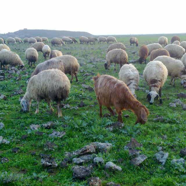 Derik Kocatepe Köyü Resimleri 1