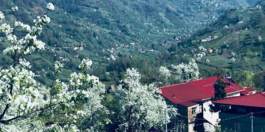 Fındıklı Karaali Köyü Resimleri