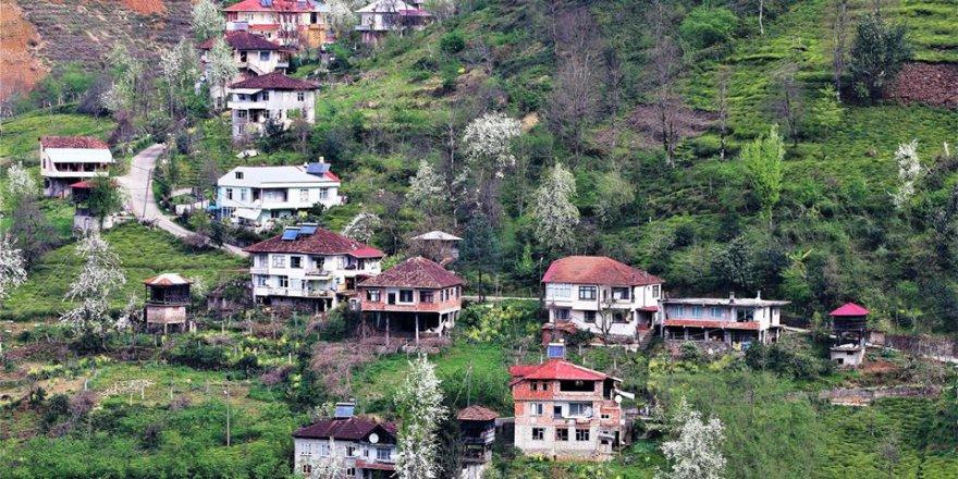Fındıklı Sulak Köyü Resimleri