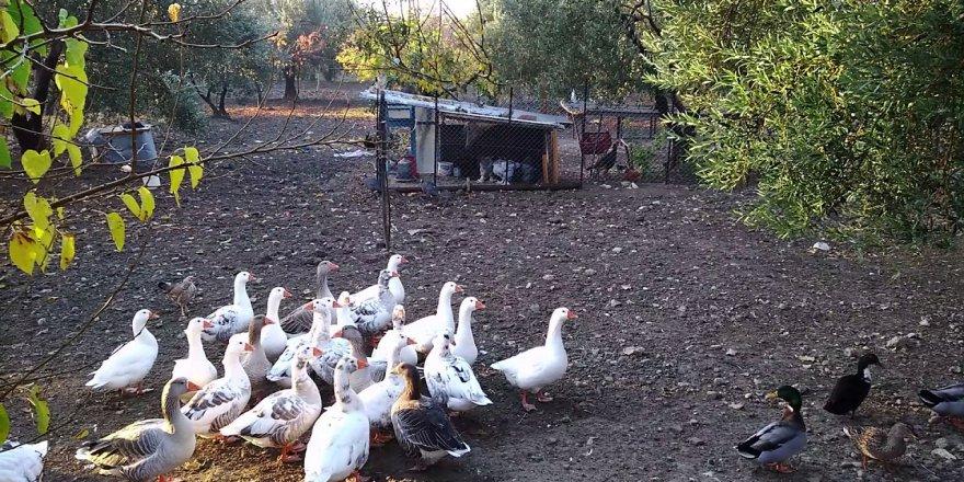Ahmetli Sindelli Köyü Resimleri