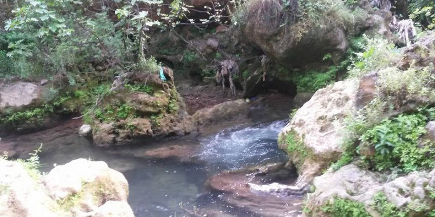 Kızıltepe Alipaşa Köyü Resimleri