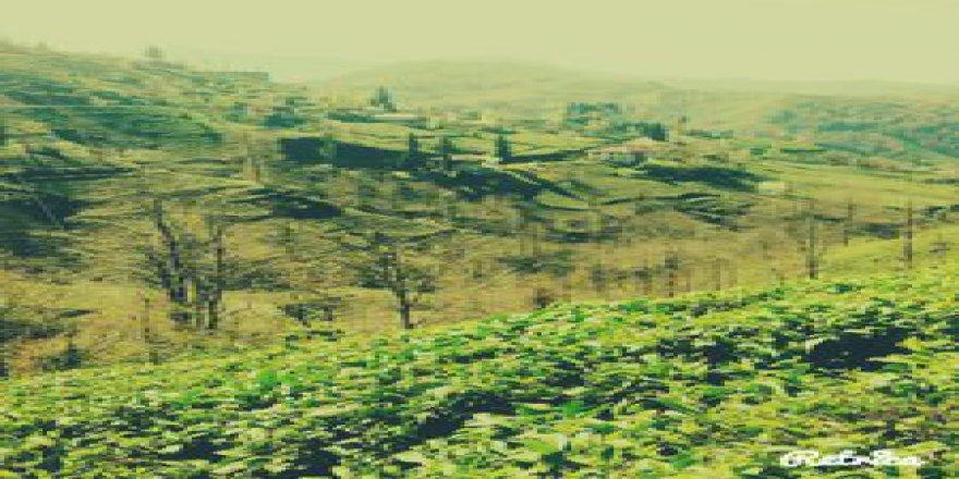 Kalkandere İncirli Köyü Resimleri