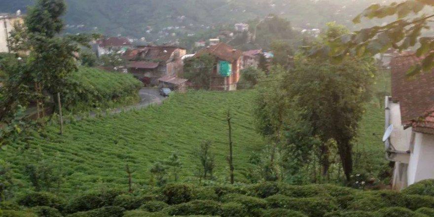 Kalkandere Soğuksu Köyü Resimleri