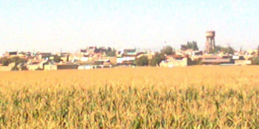 Kızıltepe Arıklı Köyü Resimleri