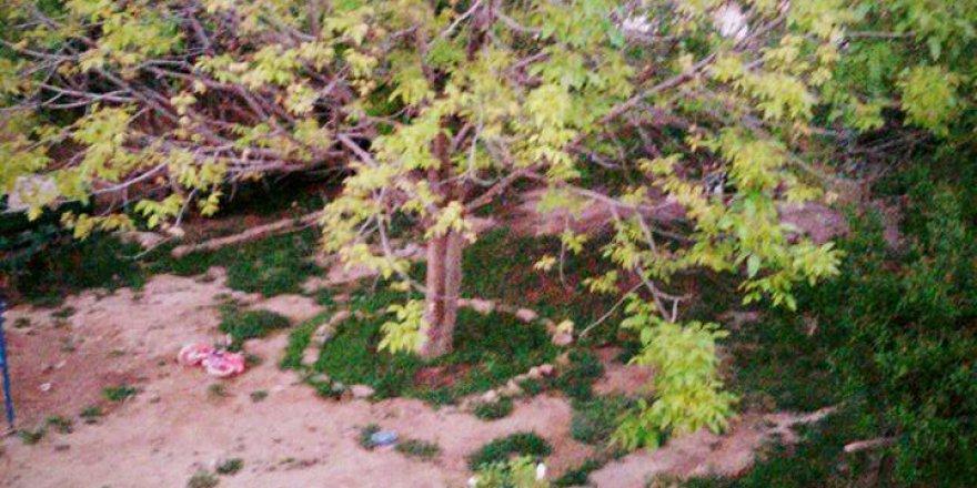 Kızıltepe Atmaca Köyü Resimleri