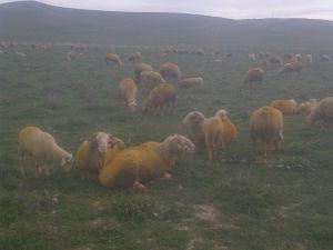 Afyon Emirdağ Karaağaç Köyü Resimleri