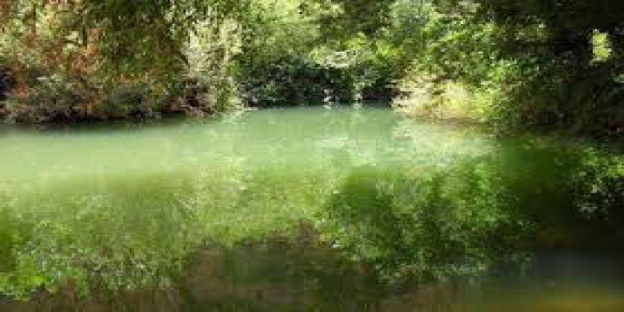 Mazıdağı Yeşilköy Köyü Resimleri