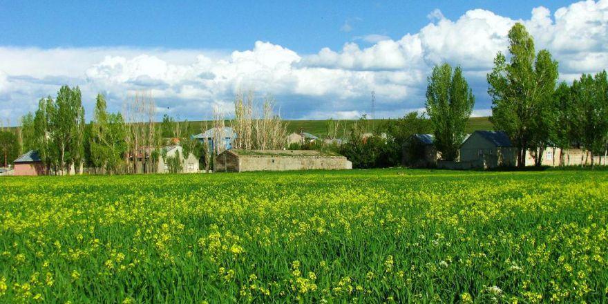 Ağrı Merkez Murat Köyü Resimleri