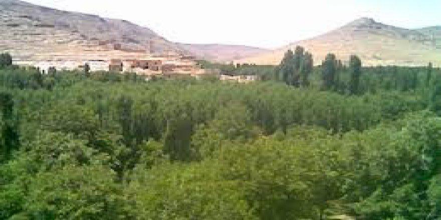 Midyat Sivrice Köyü Resimleri