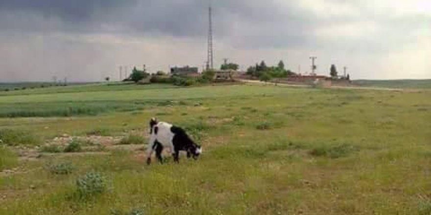 Nusaybin Tepeören Köyü Resimleri