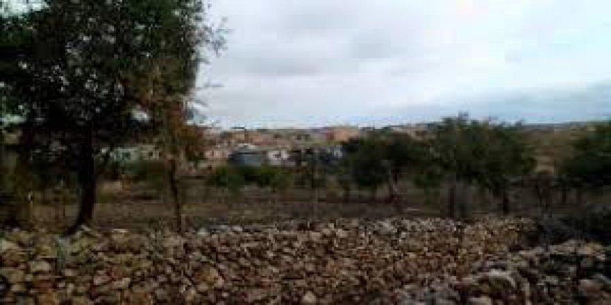 Savur Taşlık Köyü Resimleri