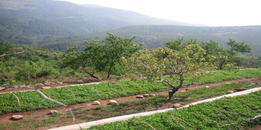 Kula Sarnıçköy Köyü Resimleri