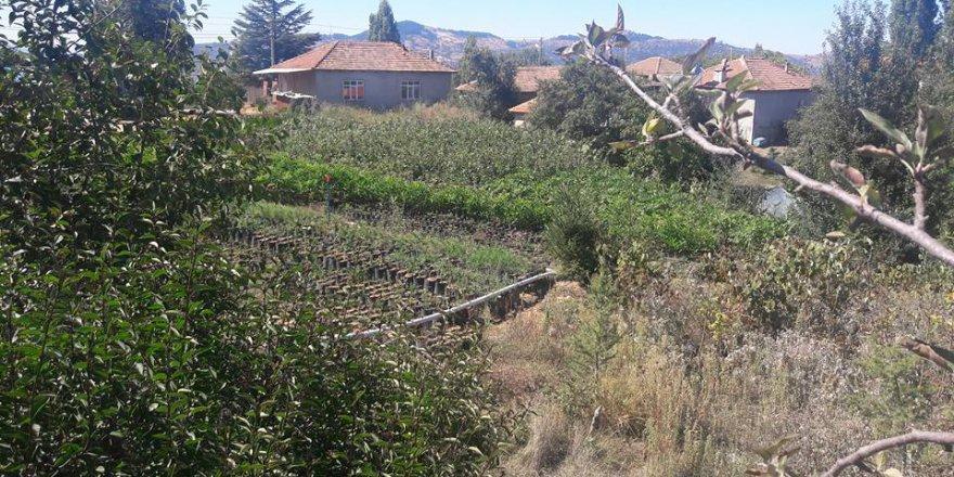 Salihli Yeniköy Köyü Resimleri
