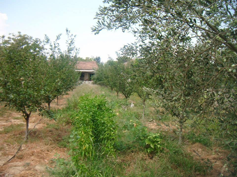Salihli Yeşilkavak Köyü Resimleri 1