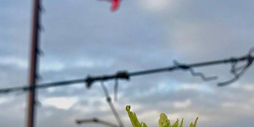 Sarıgöl Çanakçı Köyü Resimleri