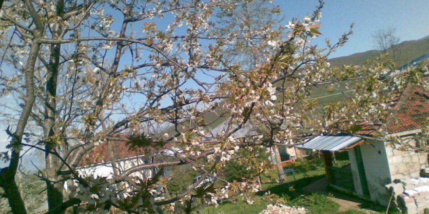 Amasya Taşova Tekpınar Köyü Resimleri