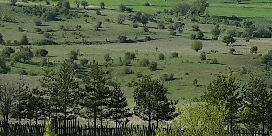 Gerede Akçabey Köyü Resimleri