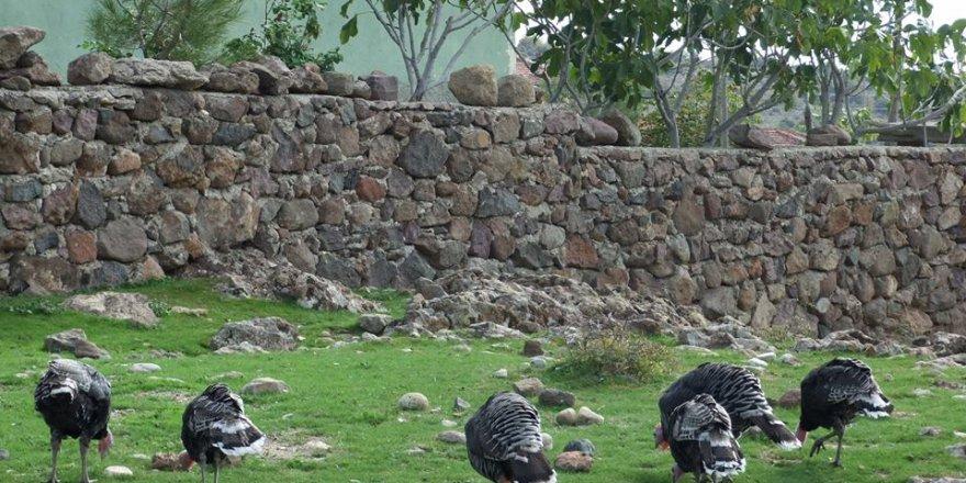 Selendi Yenice Köyü Resimleri
