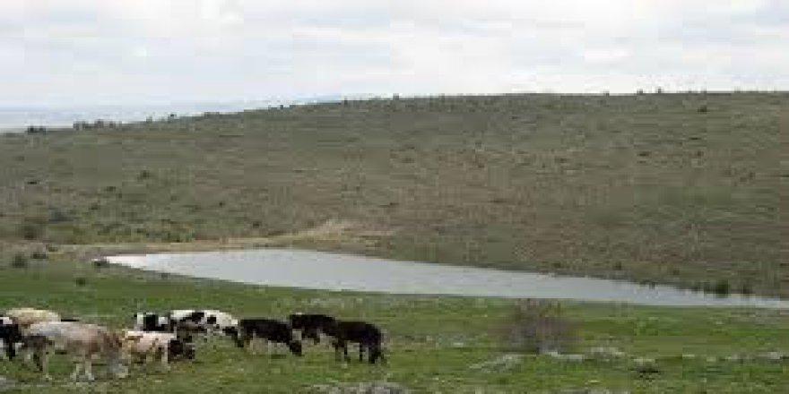Yeniçağa Çamlık Köyü Resimleri